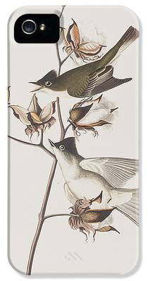 Flycatcher iPhone 5s Cases