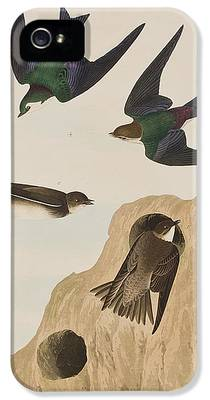 Swallow iPhone 5s Cases
