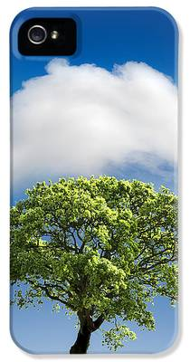 Tree IPhone 5s Cases