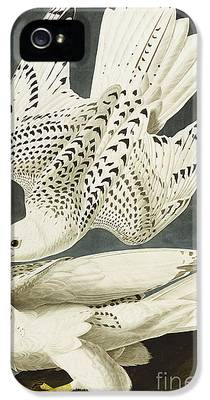Falcon iPhone 5s Cases