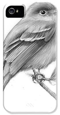 Flycatcher iPhone 5s Cases