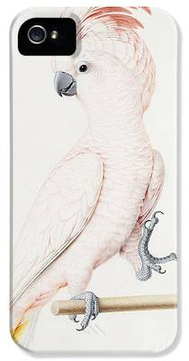 Parakeet iPhone 5s Cases