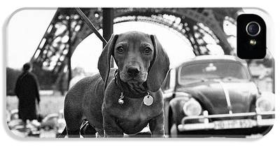 Dachshund IPhone 5s Cases