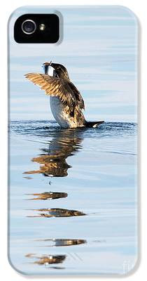 Auklets iPhone 5s Cases