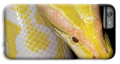 Burmese Python iPhone 6 Plus Cases