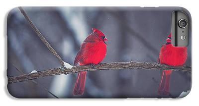 Cardinal iPhone 6 Plus Cases