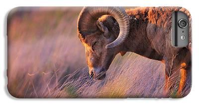 Goat iPhone 6 Plus Cases