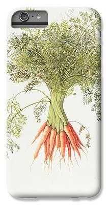 Carrot iPhone 6 Plus Cases