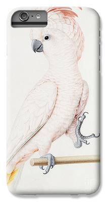 Parakeet iPhone 6 Plus Cases