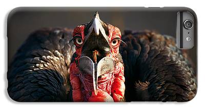 Hornbill iPhone 6 Plus Cases