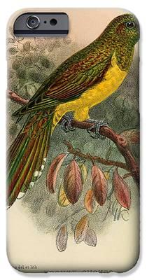 Cuckoo IPhone 6s Cases