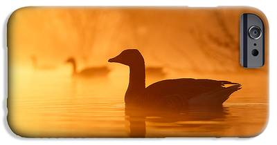 Geese iPhone 6s Cases