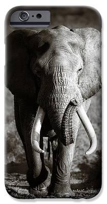 Bull iPhone 6s Cases