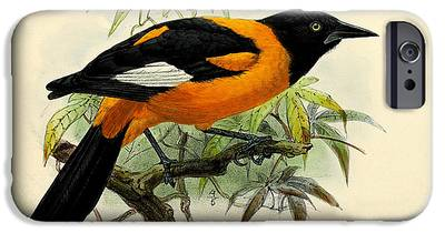 Oriole IPhone 6s Cases