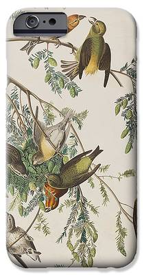 Crossbill iPhone 6s Cases