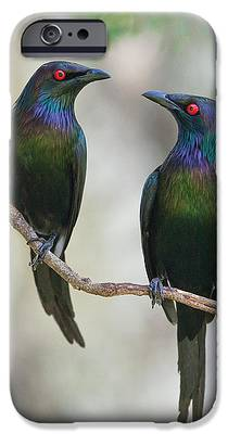 Starlings IPhone 6s Cases