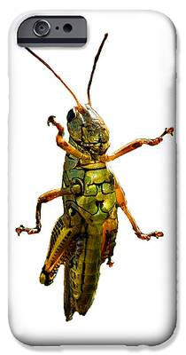 Grasshopper iPhone 6s Cases