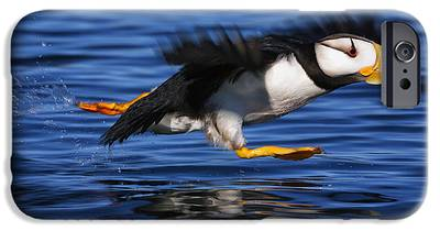 Puffin iPhone 6s Cases