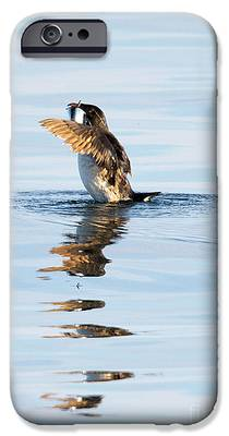 Auklets iPhone 6s Cases