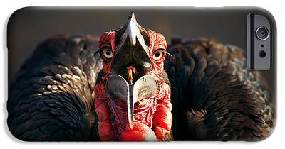 Hornbill iPhone 6s Cases
