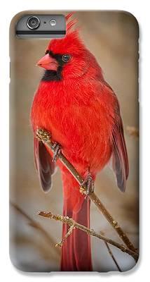 Cardinal IPhone 6s Plus Cases