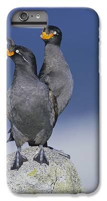 Auklets IPhone 6s Plus Cases