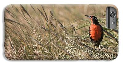 Meadowlark iPhone 6s Plus Cases