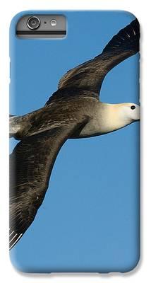 Albatross IPhone 6s Plus Cases