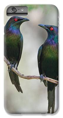 Starlings IPhone 6s Plus Cases