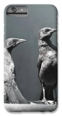 Blackbird IPhone 6s Plus Cases