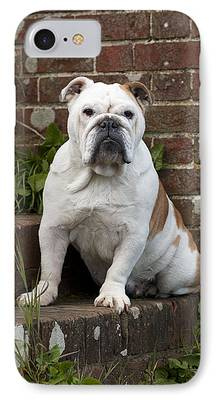 Dog On Front Steps iPhone Cases