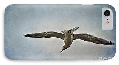 Flying Seagull Mixed Media iPhone Cases
