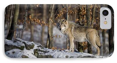 Timber Wolf Pics iPhone Cases