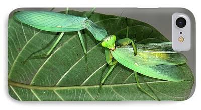 Eating Entomology iPhone Cases
