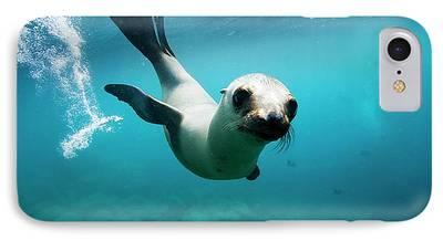 California Sea Lions iPhone Cases