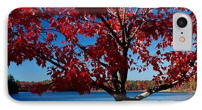 Walden Pond Photographs iPhone Cases