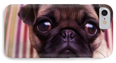 Pug Puppy Cute Dog Breed Portrait Pet Animal Toy Lap iPhone Cases