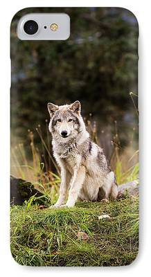 Husky iPhone Cases