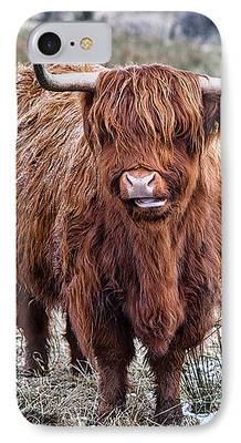 Highland Coo iPhone Cases