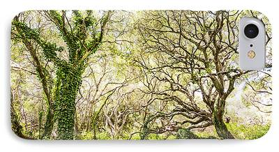 Live Oaks iPhone Cases