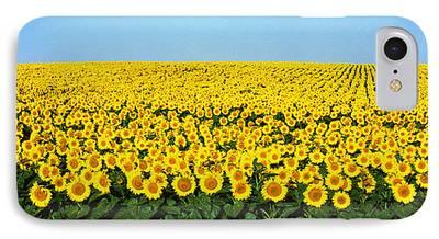 Sunflower Fields iPhone Cases