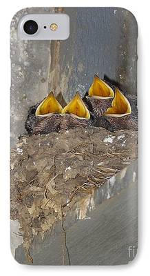 Swallow Chicks iPhone Cases