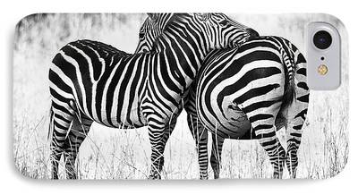 Zebra Art iPhone Cases