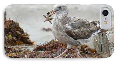 Seagull With Starfish iPhone Cases