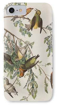 Crossbill iPhone 7 Cases