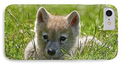 Arctic Wolf Pics Mixed Media iPhone Cases