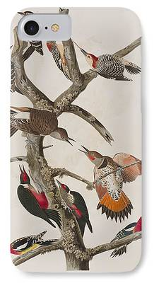 Hairy Woodpecker iPhone Cases