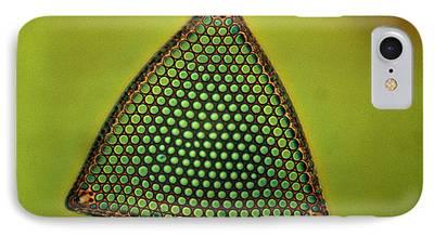 Triceratium Sp iPhone Cases
