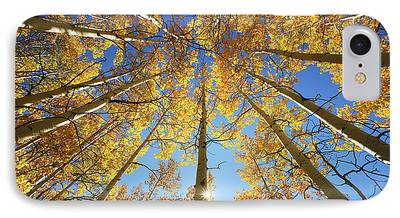 Tall Trees iPhone Cases