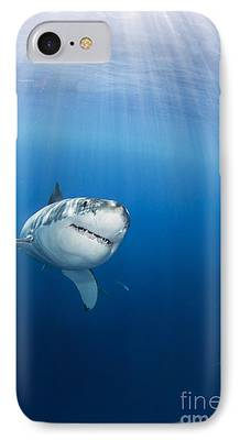 Great Photographs iPhone Cases